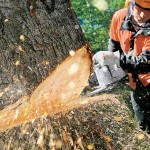 BSA Chainsaw Safety Training